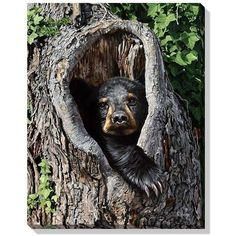 Black Bear Cub Hideout Wrapped Canvas Art - American Expedition