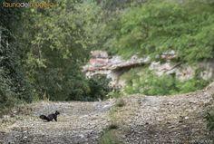 31/05/2014 – Incontri sulle stradine del Mugello… lo scoiattolo rosso