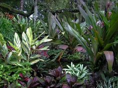 Expert gardener Felder Rushing recommends these indoor tropicals for their beautiful foliage and easy care.