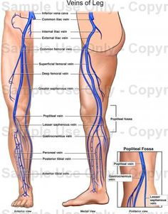 Varicose vein pain in inner thigh : Bitcoin user base growth