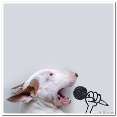 Dog Owners Creates Fun Illustrations With His Bull Terrier