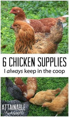 There are chicken supplies (feed, bedding) and then there are *chicken supplies. The things that I've learned to keep on hand all the time, just in case.