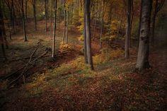 Woods by Akos Major, via Behance