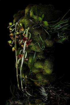 20130728_botanical_sculpure_of_amazon_010