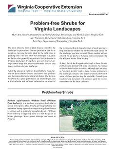 Problem-free Shrubs for Virginia Landscapes