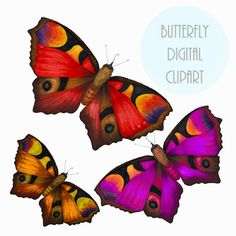 Butterfly Hand drawn Clipart Clip Art-for by CHOOMITEXTILE on Etsy