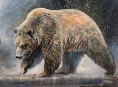 Canadian Artist and Painter Shannon Ford is a featured artist at the mountain galleries at the fairmont. Shannon's paintings are available. Canadian Artists, Animal Paintings, Brown Bear, Ford, Gallery, Prints, Animals, Animales, Animaux