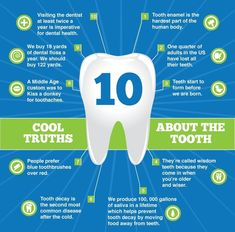 Cool #toothtruths  A tooth (plural teeth) is a small, calcified, whitish structure found in the jaws (or mouths) of many vertebrates and used to break down food.   Some animals, particularly carnivores, also use teeth for hunting or for defensive purposes. The roots of teeth are covered by gums. Teeth are not made of bone, but rather of multiple tissues of varying density and hardness.   Continue reading: http://elitedentalofnatick.com/cool-tooth-truths/