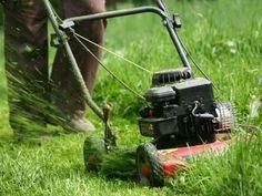 Dowiedz się wszystkiego o koszeniu trawnika. Poznaj zasady prawidłowego koszenia trawy.