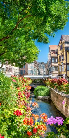 Colmar, France - doesn't it just look lovely in Colmar?? I love all of the beautiful plants + flowers.
