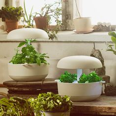 Smart Garden Module - White - by Plantui #MONOQI