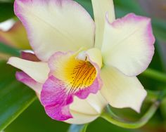 Orchid by Mike Oberg