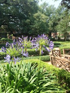 The Houston Hospice Garden in May 2016