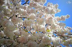 #flowers #flower #TagsForLikes #petal #petals #nature #beautiful #love #pretty #plants #blossom #summer #flowerstagram #flowersofinstagram #flowerstyles_gf #flowerslovers #botanical #floral #florals #insta_pick_blossom #flowermagic #instablooms #bloom #blooms #botanical #floweroftheday #nikon3100 #akapicturesart