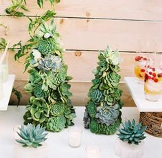 How cool are these hens and chicks Christmas tree/table decorations for the holidays? Pretty cool.
