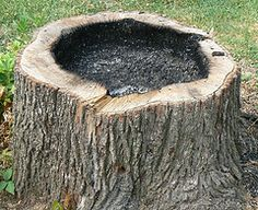 tree stump planter -- using a fire to create the hole