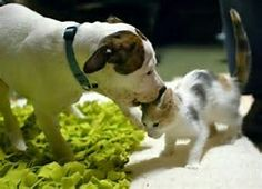 Puppy Kisses for Kitty ❤