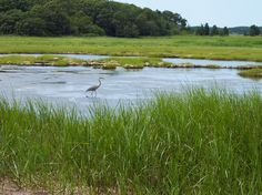 marshes on cape cod