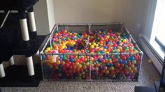 A Tiny Little Dog Playfully Leaps Into His Custom Ball Pit In Pursuit of a Favorite Toy - Tap the pin for the most adorable pawtastic fur baby apparel! You'll love the dog clothes and cat clothes! Dog Play Room, Dog Rooms, Ball Pit For Dogs, Ball Pits, Ball Pit Diy, Ball Pit House, Pit Dog, Most Expensive Dog, Dog Playground