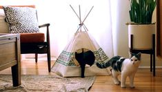 Cat Tipi's... cats love them!  Available on-line www.pussandpooch.co.nz