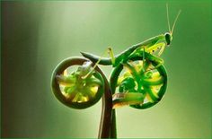 grashopper on a bike