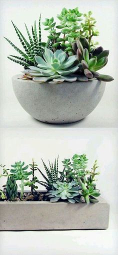 Amazing 56 Incredibly Amazing DIY Succulents Project Ideas http://decoraiso.com/index.php/2018/06/12/56-incredibly-amazing-diy-succulents-project-ideas/