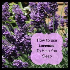 Find out ways to use lavender in your home to help you sleep better. Studies show that using lavender essential oil will promote calmness & quiet the mind.