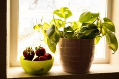 Strawberry and plant on the windowsill.