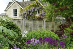 Oxford Botanical Garden is filled with purple blooms– including allium, columbine, wisteria