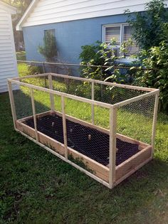 Protect Strawberry Plants From Squirrels With A Cage
