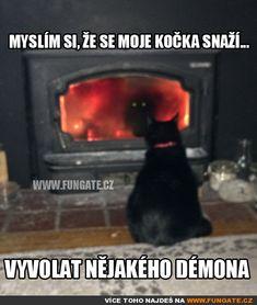 Myslím si, že se moje kočka snaží... Funny Texts, Funny Jokes, Funny Images, Funny Pictures, Jokes Quotes, Memes, Good Jokes, Warrior Cats, Cringe
