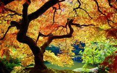 Дерево, Листья, Осень