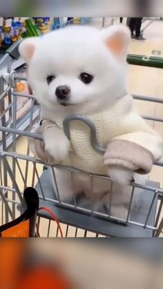 Lovely Small Dog in a Shopping Cart Enjoying The Ride