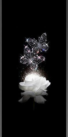 White Roses Background, White Roses Wallpaper, Wallpaper Nature Flowers, Beautiful Landscape Wallpaper, Flower Background Wallpaper, Flower Backgrounds, Butterfly Wallpaper Iphone, Black Phone Wallpaper, Dark Wallpaper