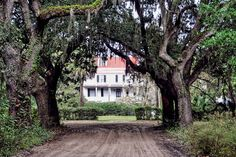 Coffin Point Plantation in Beaufort County, South Carolina. Love the old oaks! Right down the road from us!