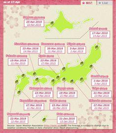 Cherry blossom Schedule Japan