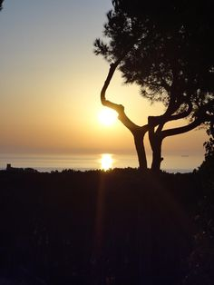 Sunrise and Pine,  Calella De Palafrugell, CostaBrava