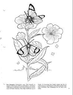 Dover Publications Coloring Books Colouring Doodle Designs Colour Book Dovers Reuse Mandala Stenciling