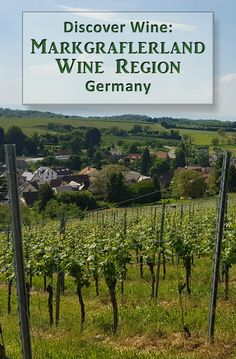Discover the Markgraflerland Wine Region in the southwestern corner of Germany. Black Forest wine tasting.