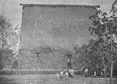 Photo: Adi Cakobau's house in Navuso Village 1900
