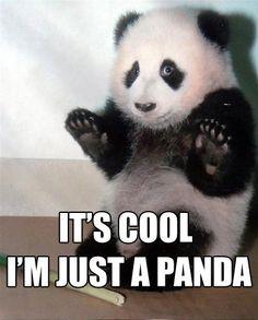 just a panda