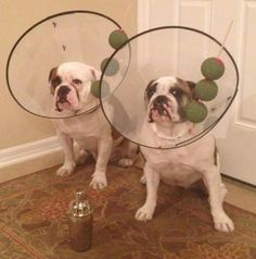 too funny.... martini dogs