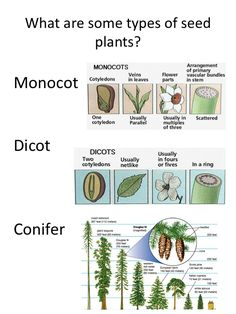 NATURE WALK: Types of seed plants printable