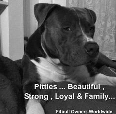 Pit bull- our home wouldn't be the same without her :)