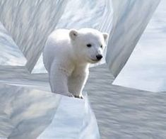 Baby Polar Bear                                                                                                                                                                                 Mais