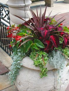 Coleus, wax begonias, phorium, & trailers I would put these in big planters on each side of a driveway/entrance and stick a solar landscape light in it for a pretty nighttime look.