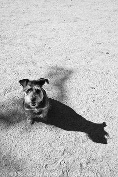 Colega y su perfil by micofotos, via Flickr