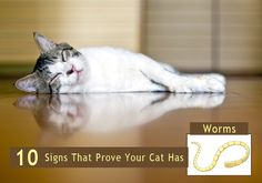 10 Signs That Prove Your Cat Has Worms. How To Check Cats For Worms? -