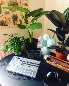 #Repost @schtang  Simple pleasures.  ______________________________________________ #korg #electribe #e2 #sennheiser #garden #indoorplants #synths #synthesizer #homestudio #bedroomstudio #music #musician #musica #instamusic #instamusica #lifestyle #vibe #pasttimes #hobby #hiphop #techno #dance #edm #musicproducer #jammin #synthporn #gearporn #incense #electribelovers
