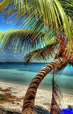 Twisted Palm tree in the Florida Keys. Want to be there now ! :)